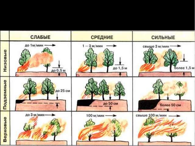 Характеристика типов лесных пожаров