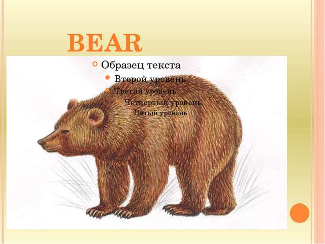 --- BEAR