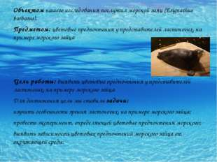 Объектом нашего исследования послужил морской заяц (Erignathus barbatus). Пре