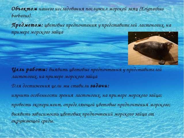 Объектом нашего исследования послужил морской заяц (Erignathus barbatus). Пре...