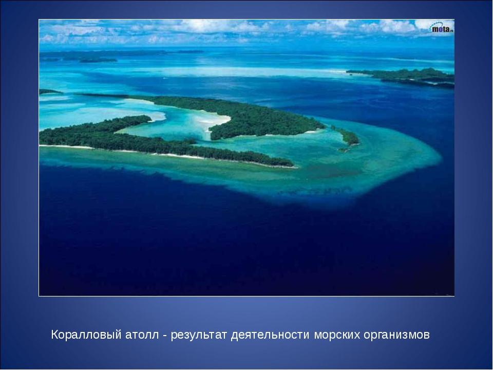 Коралловый атолл - результат деятельности морских организмов