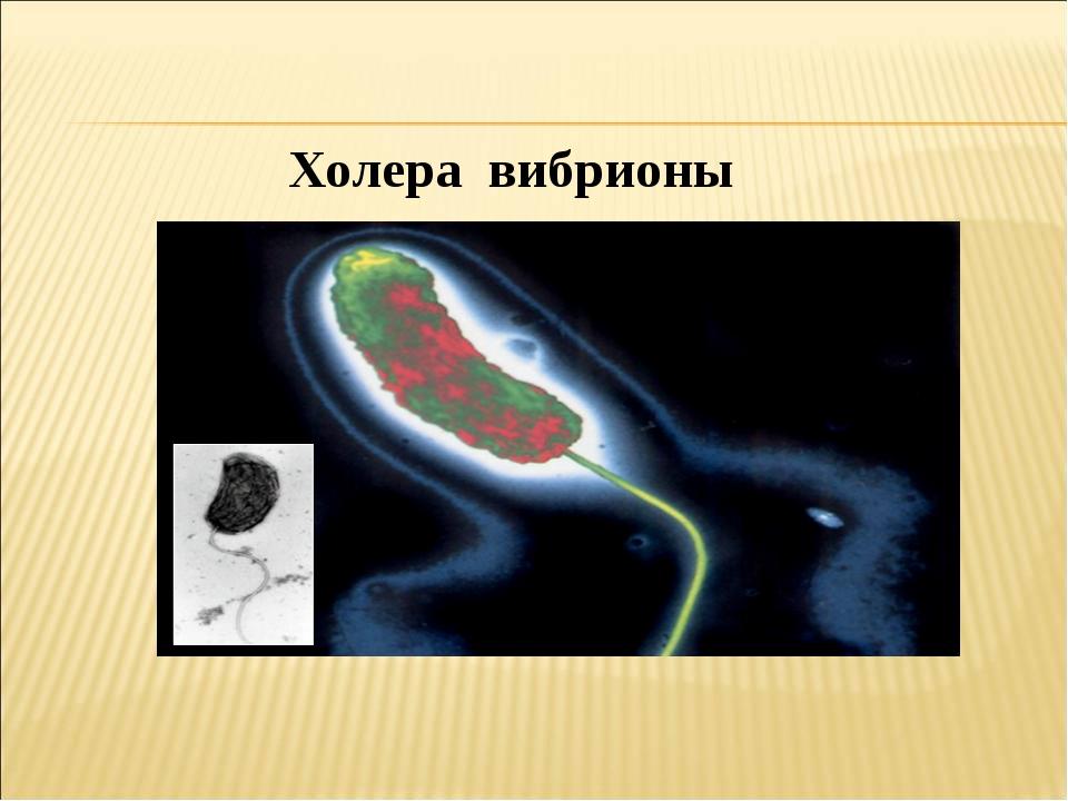 Холера вибрионы