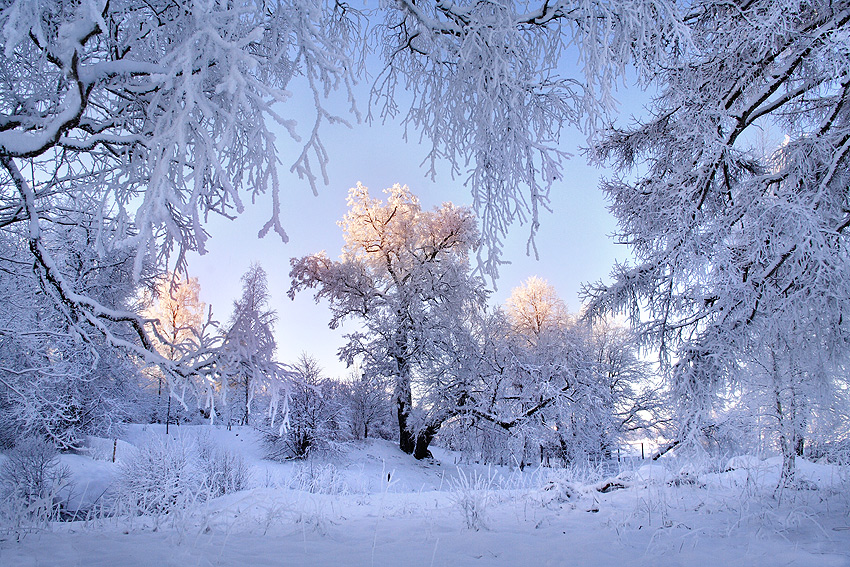 http://dl.dropbox.com/u/221796/priroda_su/priroda/winter/2009/arnis_k.jpg
