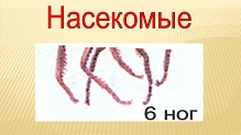 hello_html_m523248f7.jpg