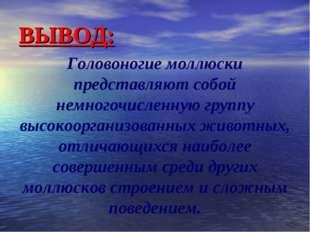 ВЫВОД: Головоногие моллюски представляют собой немногочисленную группу высоко