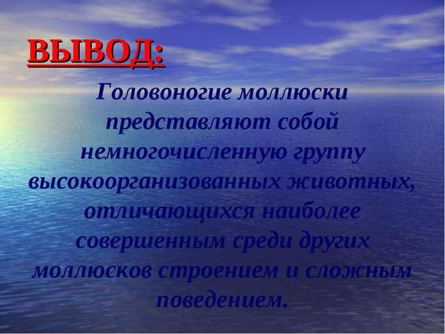 ВЫВОД: Головоногие моллюски представляют собой немногочисленную группу высоко...