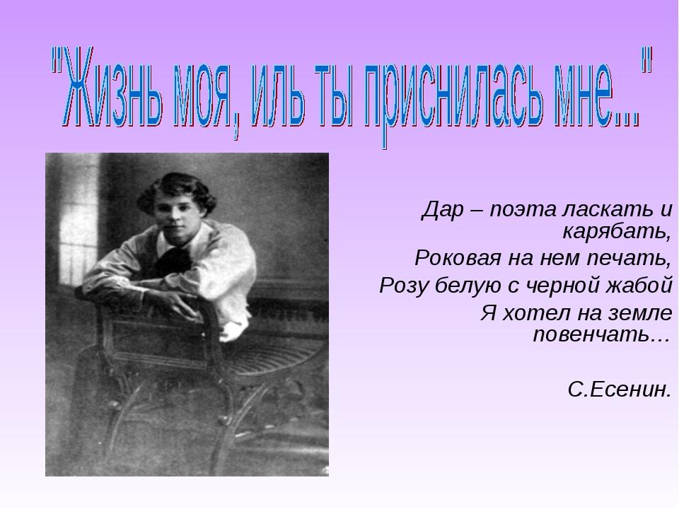 Дар – поэта ласкать и карябать, Роковая на нем печать, Розу белую с черной жа...