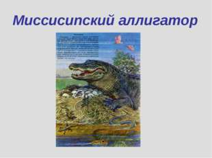 Миссисипский аллигатор