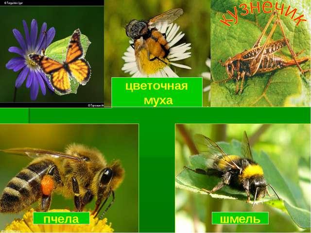 пчела шмель цветочная муха