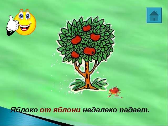 Яблоко от яблони недалеко падает.