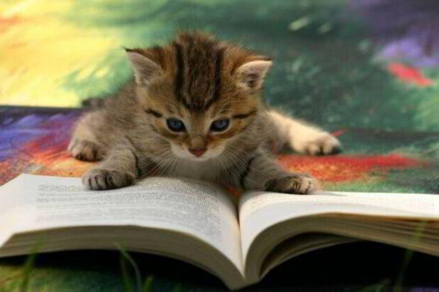 D:\Главоне\ГЛАВНОЕ 2\КАРТИНКИ\УЧЕБА книги\Cat-CatReadingBook03.jpg