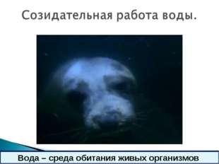 * Вода – среда обитания живых организмов