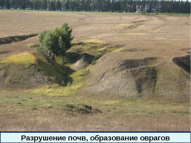 * Разрушение почв, образование оврагов