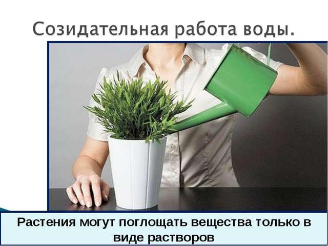 * Растения могут поглощать вещества только в виде растворов