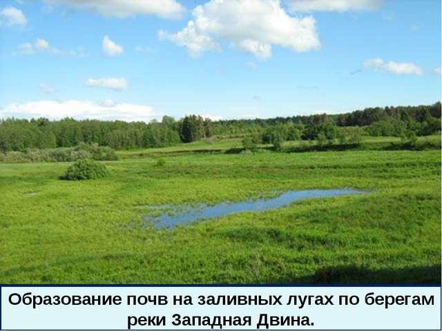 * Образование почв на заливных лугах по берегам реки Западная Двина.