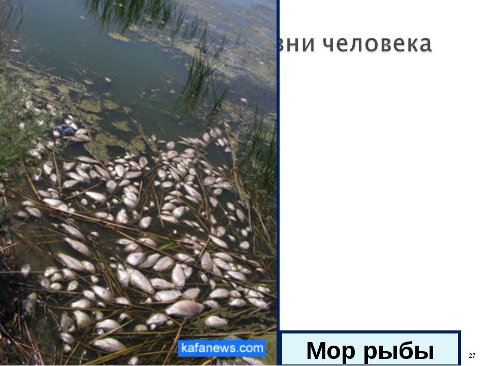 * Мор рыбы