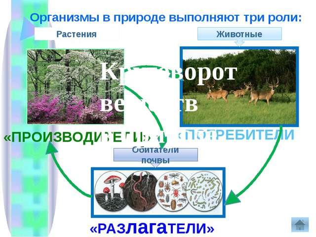 Организмы в природе выполняют три роли: «ПРОИЗВОДИТЕЛИ» «ПОТРЕБИТЕЛИ» «РАЗла...