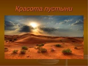 Красота пустыни