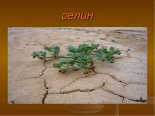 селин