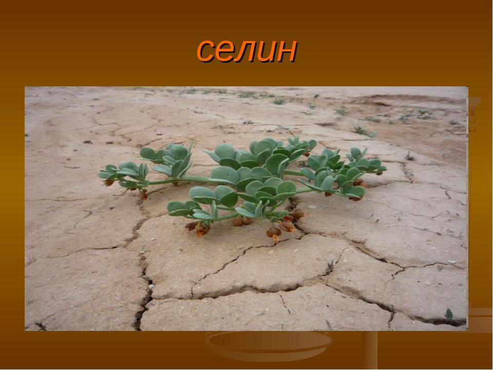 момент растения пустыни фото с названиями отдельной