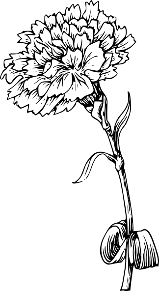C:\Users\ВАЛЕРА\Desktop\Газета к 9 мая\carnation_flower_tattoos_3.png