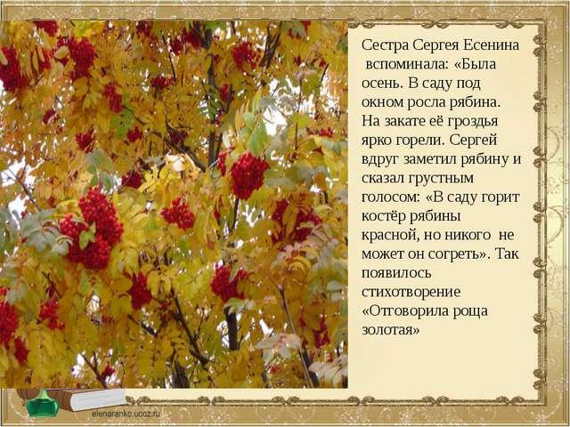 Сестра Сергея Есенина вспоминала: «Была осень. В саду под окном росла рябина....