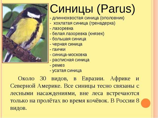 Синицы (Parus) - длиннохвостая синица (ополовник) - хохлатая синица (гренадер...