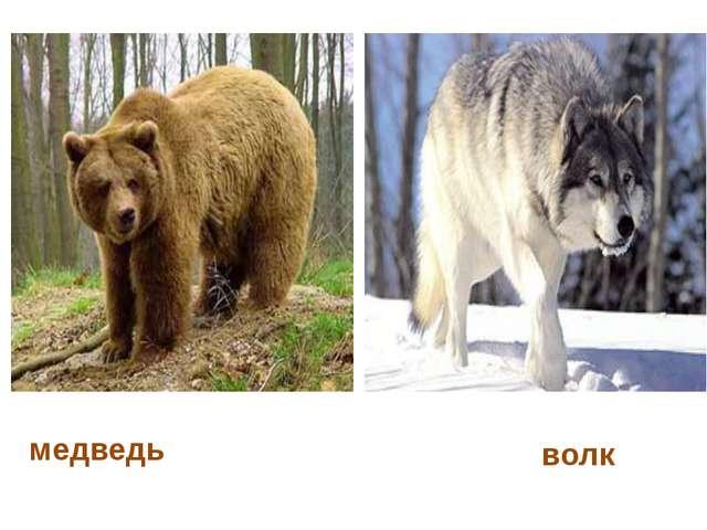 медведь волк
