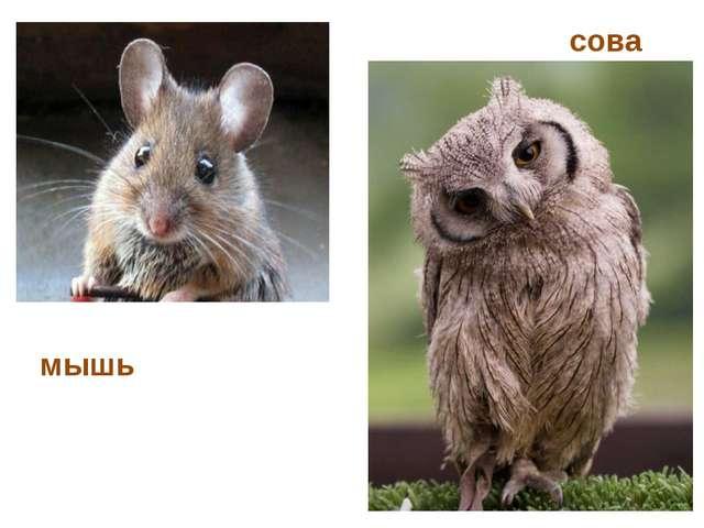 мышь сова