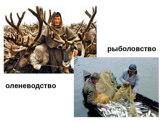 оленеводство рыболовство