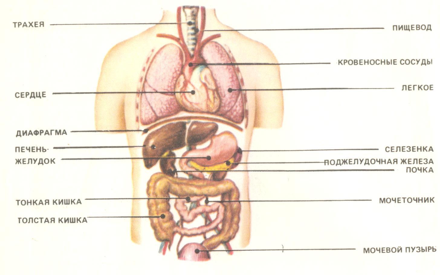 Сперма шея пищевод клитор