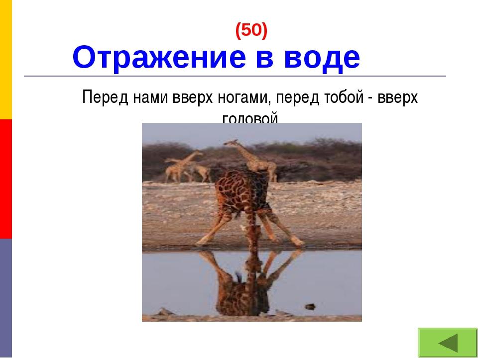 Отражение в воде (50) Перед нами вверх ногами, перед тобой - вверх головой