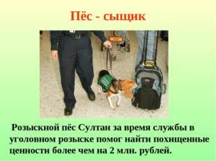 Пёс - сыщик Розыскной пёс Султан за время службы в уголовном розыске помог на