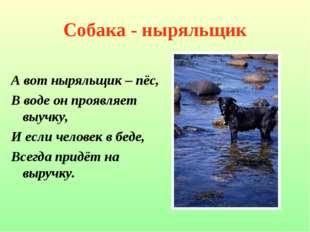 Собака - ныряльщик А вот ныряльщик – пёс, В воде он проявляет выучку, И если
