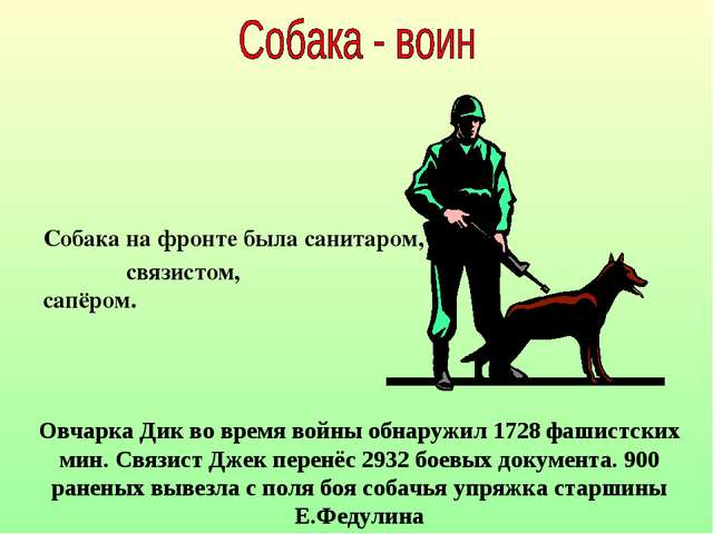 Собака на фронте была санитаром, связистом, сапёром. Овчарка Дик во время вой...