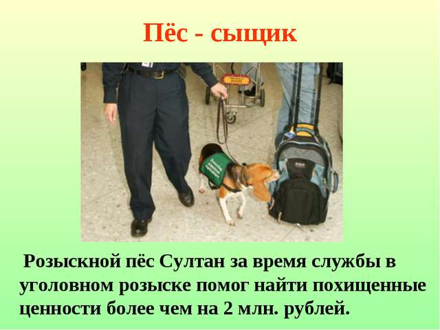 Пёс - сыщик Розыскной пёс Султан за время службы в уголовном розыске помог на...