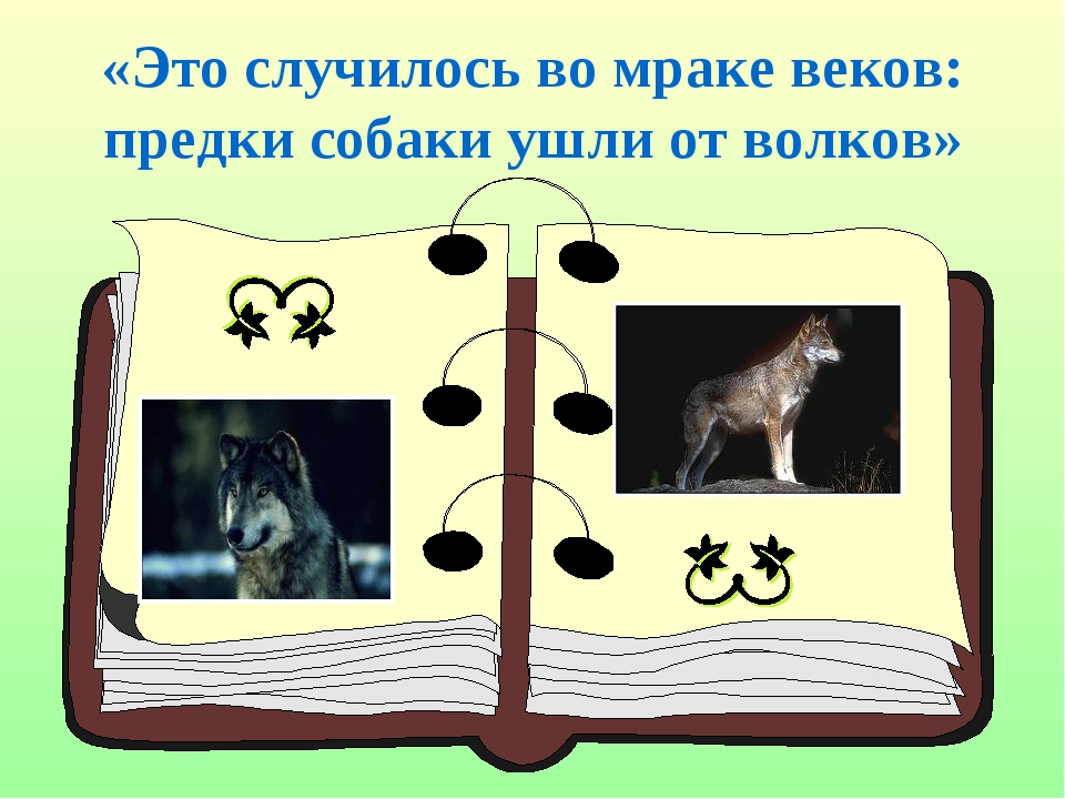«Это случилось во мраке веков: предки собаки ушли от волков»
