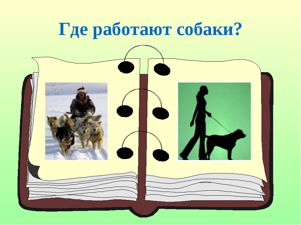 Где работают собаки?