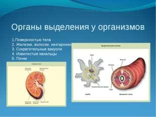 Органы выделения у организмов 1.Поверхностью тела 2. Железки, волоски, нектар