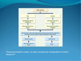 Проанализируйте схему, из каких процессов складывается обмен веществ?
