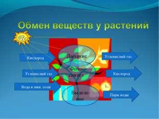 Углекислый газ Кислород Вода и мин. соли Углекислый газ Кислород Пары воды Ды