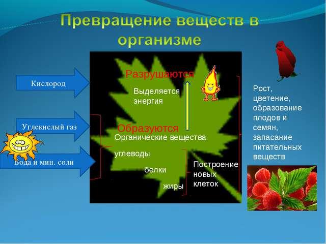 Кислород Углекислый газ Вода и мин. соли Органические вещества углеводы белки...