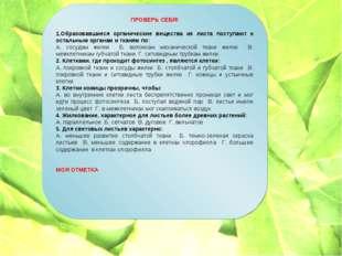 ПРОВЕРЬ СЕБЯ! 1.Образовавшиеся органические вещества из листа поступают к ост