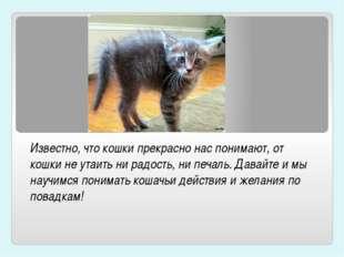 Известно, что кошки прекрасно нас понимают, от кошки не утаить ни радость, ни