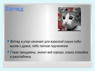 Взгляд Взгляд в упор означает для взрослой кошки либо вызов к драке, либо пол