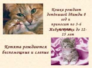 Живут кошки до 12-15 лет Кошка рождает детёнышей дважды в год и приносит по 3