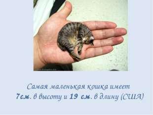 Самая маленькая кошка имеет 7см. в высоту и 19 см. в длину (США)