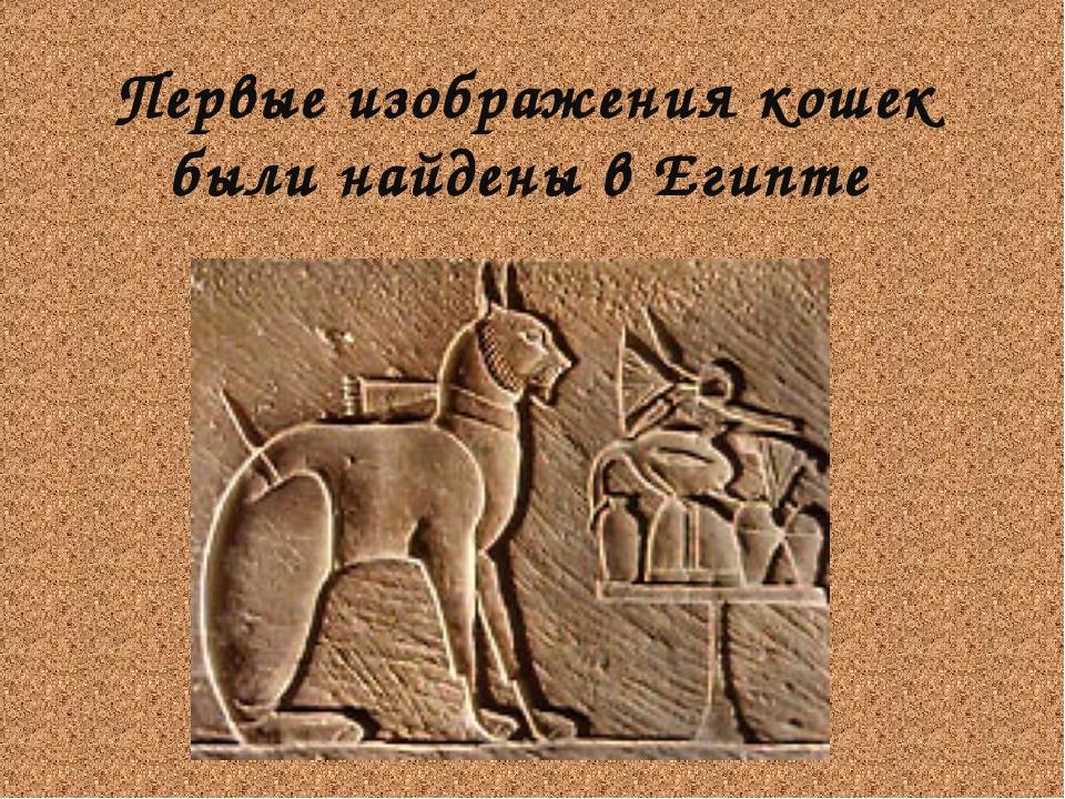 Первые изображения кошек были найдены в Египте .