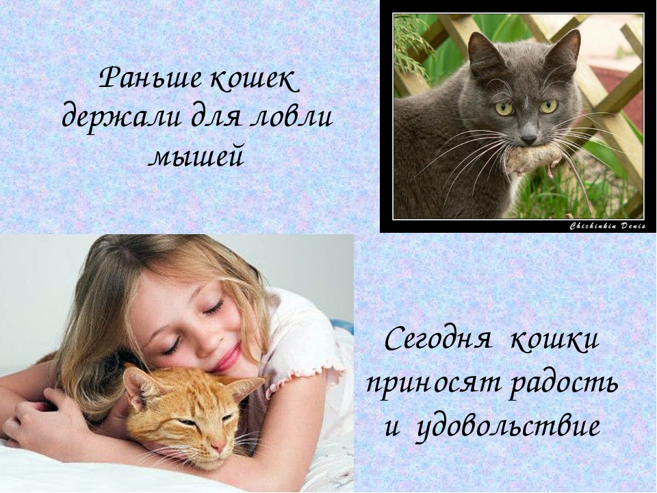 Раньше кошек держали для ловли мышей Сегодня кошки приносят радость и удовол...