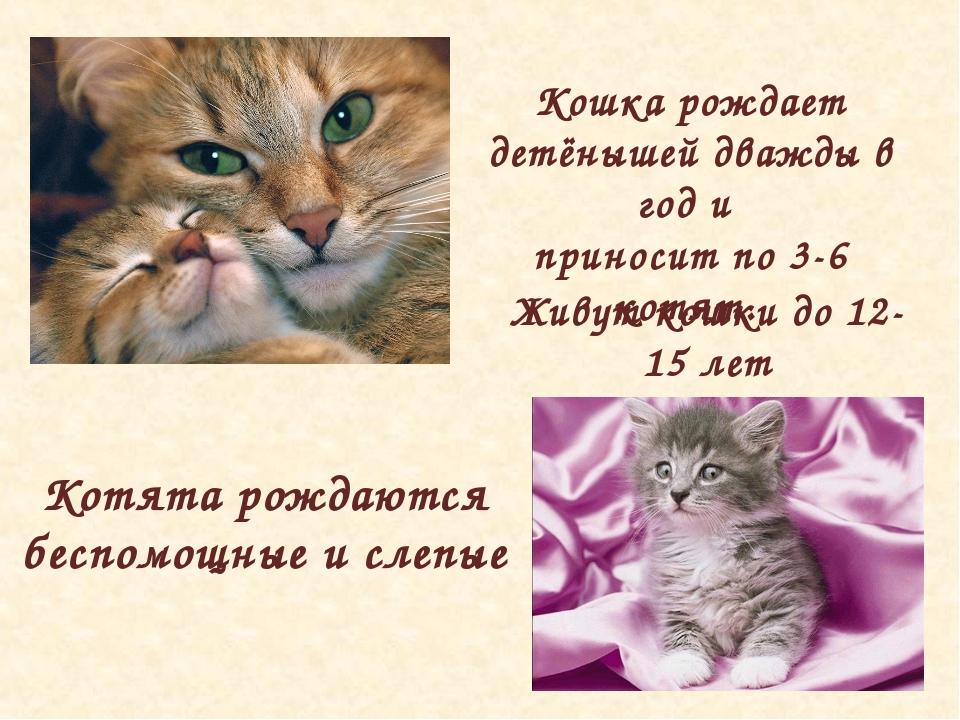 Живут кошки до 12-15 лет Кошка рождает детёнышей дважды в год и приносит по 3...